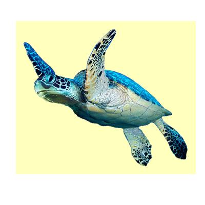 turtle_new